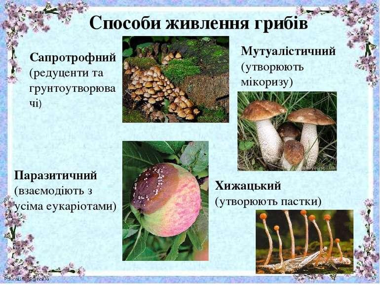 Способи живлення грибів Сапротрофний (редуценти та грунтоутворювачі) Паразити...