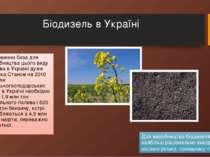 Біодизель в Україні Сировинна база для виробництва цього виду палива в Україн...