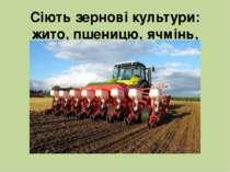 Сіють зернові культури: жито, пшеницю, ячмінь, кукурудзу, овес.