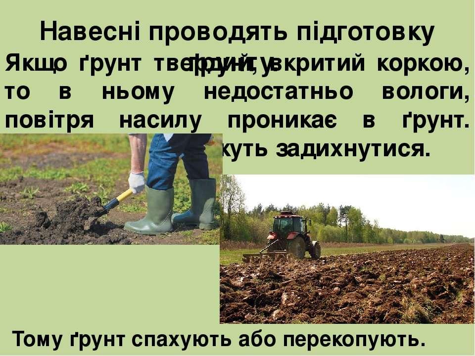 Якщо ґрунт твердий, вкритий коркою, то в ньому недостатньо вологи, повітря на...