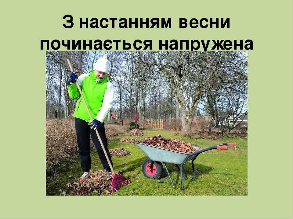 З настанням весни починається напружена робота в саду.