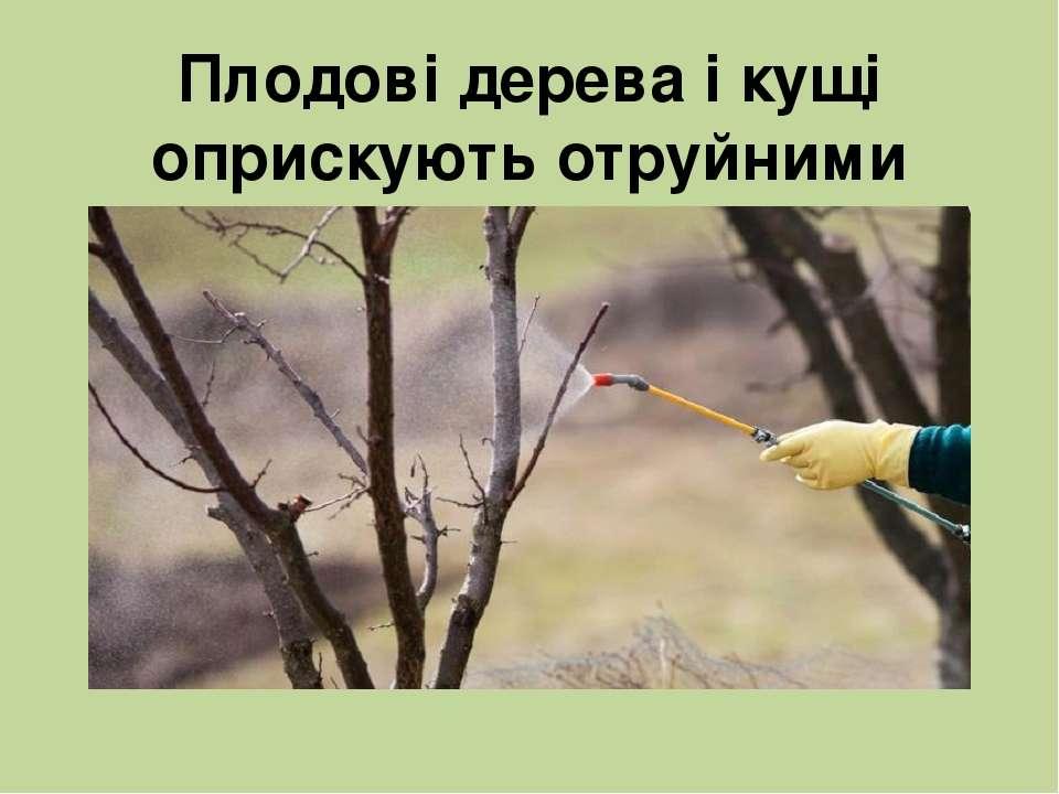 Плодові дерева і кущі оприскують отруйними речовинами, які знищують комах-шкі...