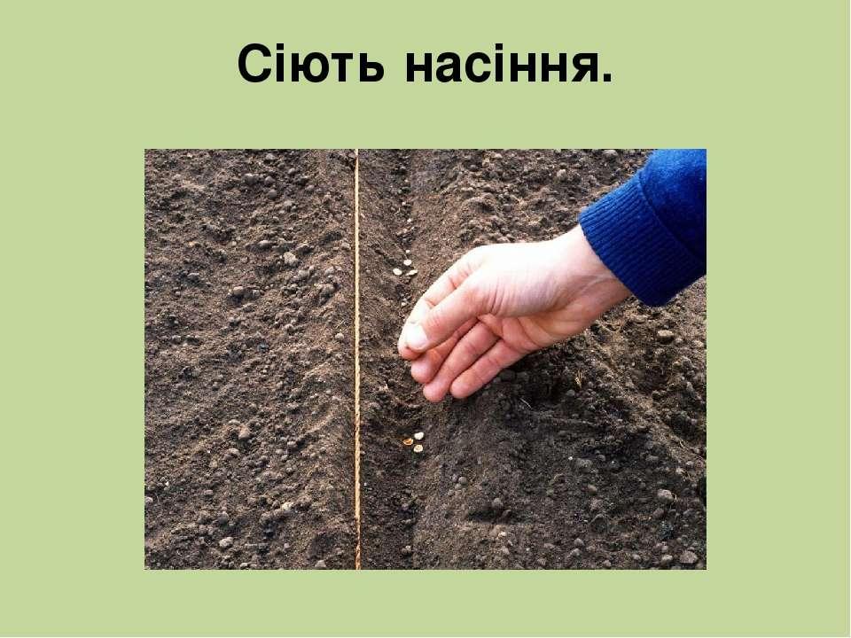 Сіють насіння.