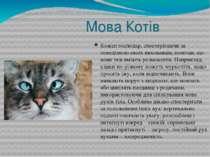 Мова Котів Кожен господар, спостерігаючи за поведінкою своїх вихованців, помі...