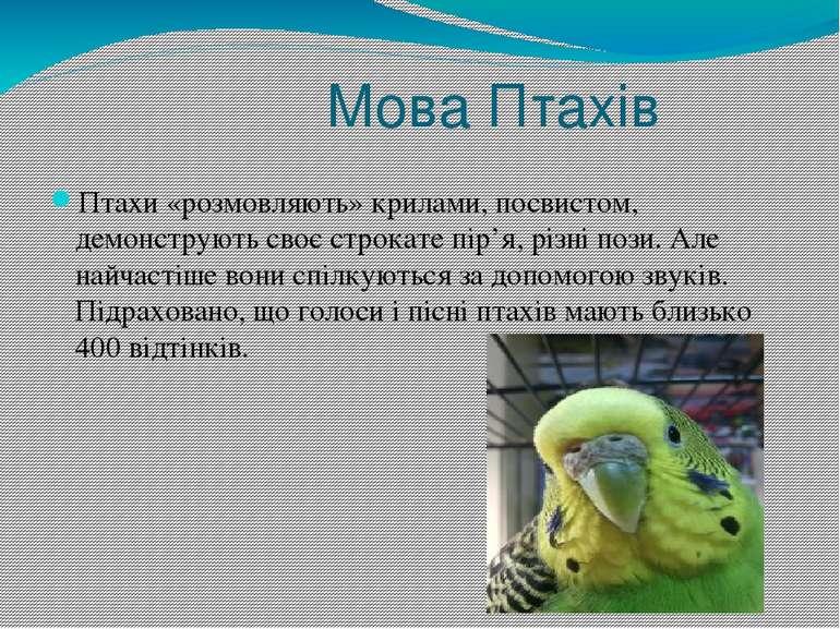 Мова Птахів Птахи «розмовляють» крилами, посвистом, демонструють своє строкат...
