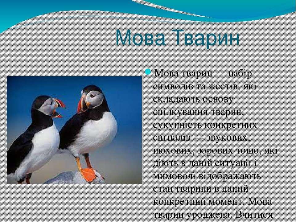 Мова Тварин Мова тварин— набір символів та жестів, які складають основу спіл...