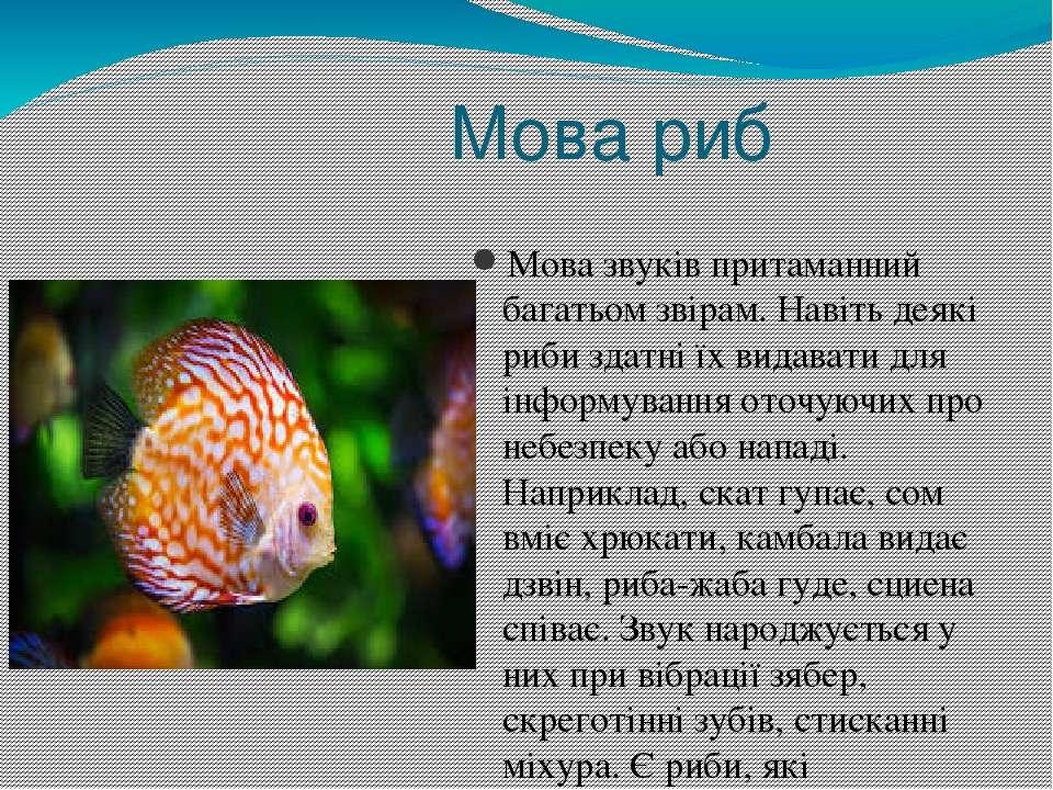 Мова риб Мова звуків притаманний багатьом звірам. Навіть деякі риби здатні їх...