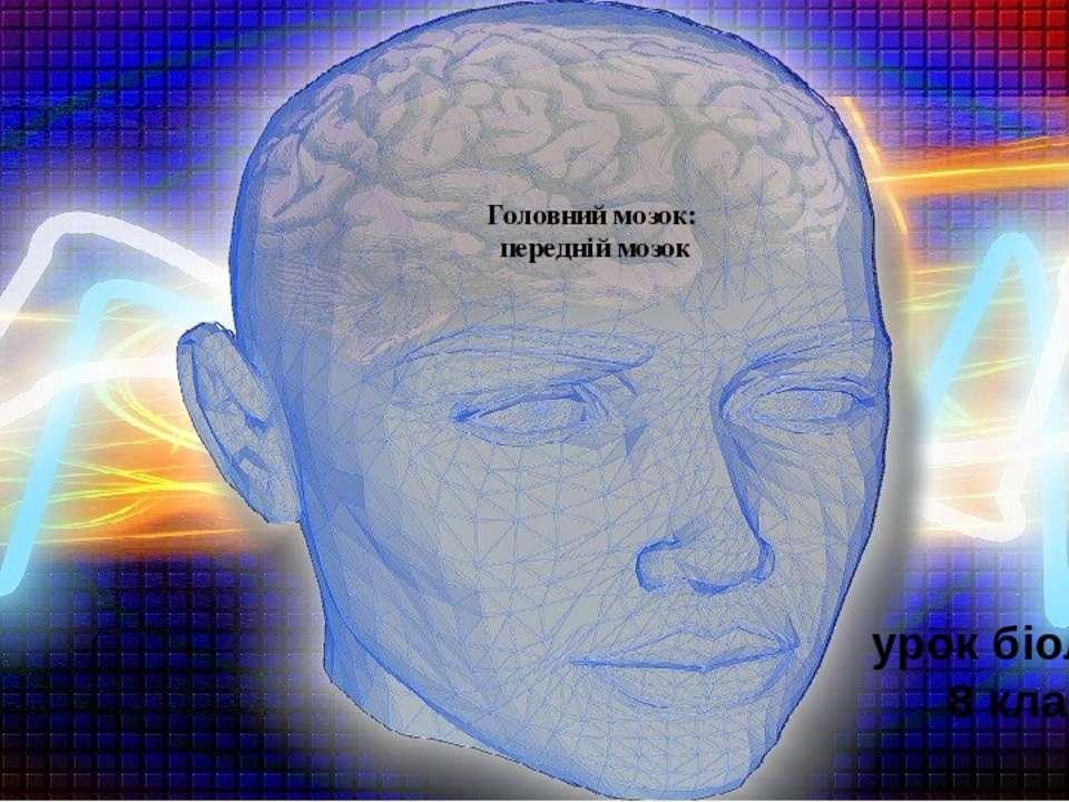 Головний мозок: передній мозок урок біології 8 клас