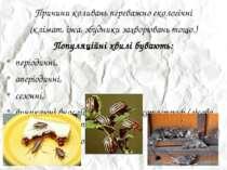 Причини коливань переважно екологічні Причини коливань переважно екологічні (...