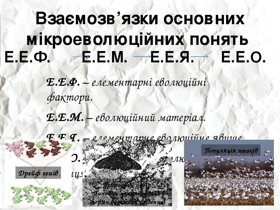 Взаємозв'язки основних мікроеволюційних понять Е.Е.Ф. Е.Е.М. Е.Е.Я. Е.Е.О.
