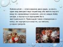 Коменсалізм — співіснування двох видів, за якого один вид використовує інший ...