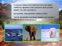 В екосистемах спостерігаються різні види симбіозу (форми співіснування двох р...