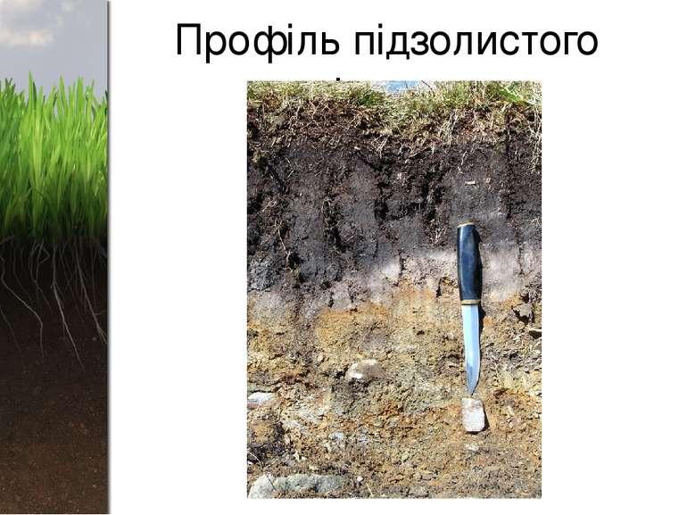 Профіль підзолистого ґрунту