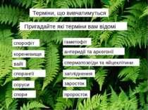 Терміни, що вивчатимуться спорофіт проросток заросток гаметофіт антеридії та ...