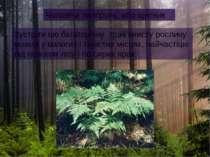 Чоловіча папороть, або щитник Зустріти цю багаторічну трав'янисту рослину мож...