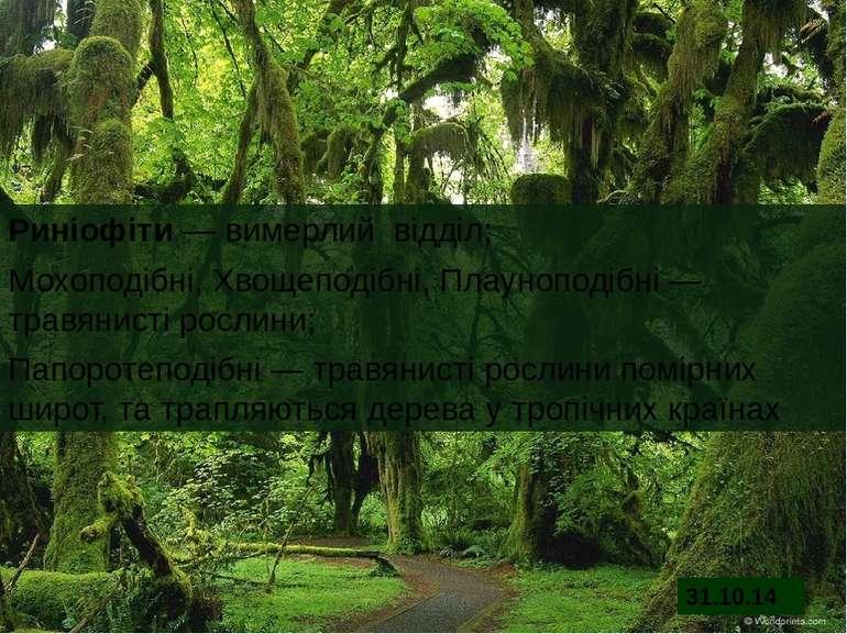 Риніофіти ― вимерлий відділ; Мохоподібні, Хвощеподібні, Плауноподібні ― травя...