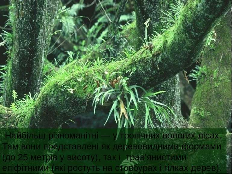Найбільш різноманітні — у тропічних вологих лісах. Там вони представлені як д...