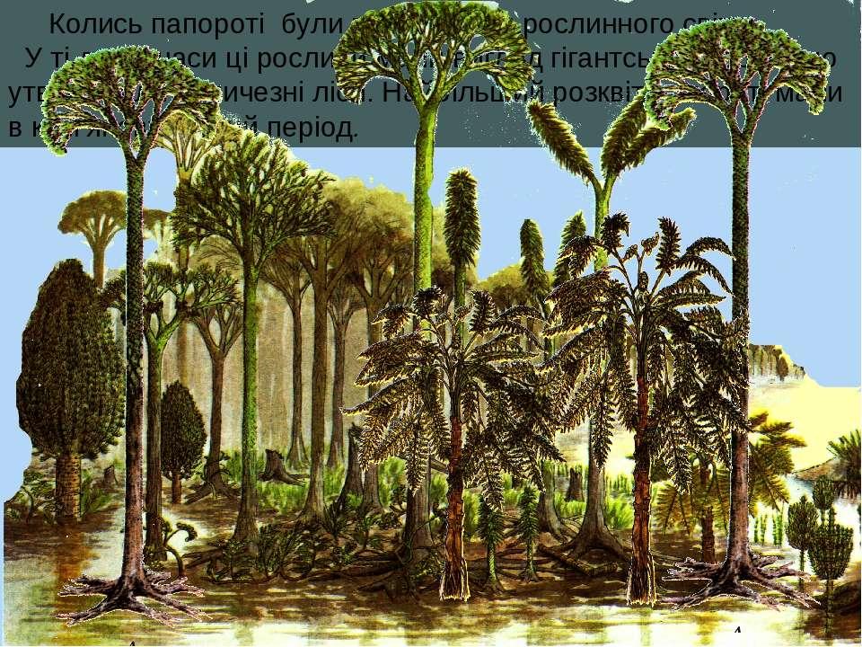 Колись папороті були володарями рослинного світу. У ті давні часи ці рослини ...