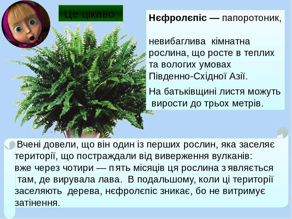 Нєфролєпіс ― папоротоник, невибаглива кімнатна рослина, що росте в теплих та ...