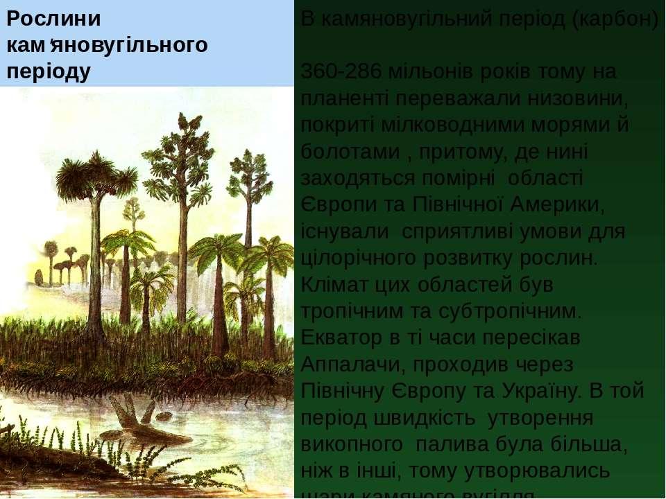 Рослини кам'яновугільного періоду В камяновугільний період (карбон) 360-286 м...