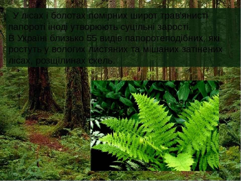 У лісах і болотах помірних широт трав'янисті папороті іноді утворюють суцільн...