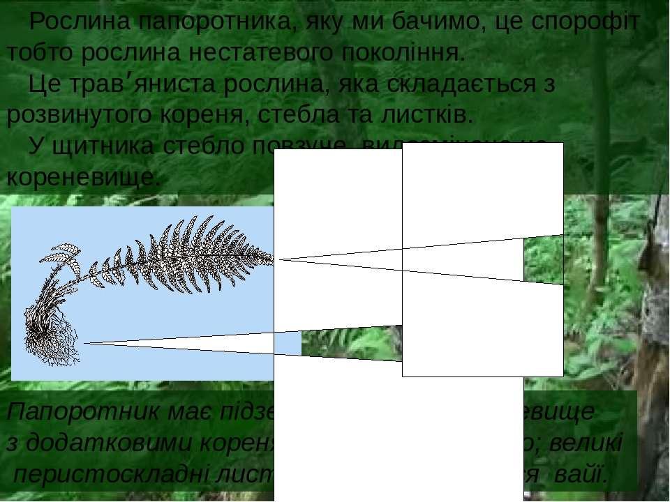Папоротник має підземний пагін кореневище з додатковими коренями; коротке сте...