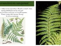 Різноманітність папоротей Орляк має з повзуче тонке кореневище і два ряди лис...