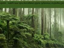 Папороті - найбільш пристосована група судинних спорових рослин Папороті нара...