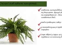 Спільні особливості папоротей: наявність листкоподібних утворень, які виконую...