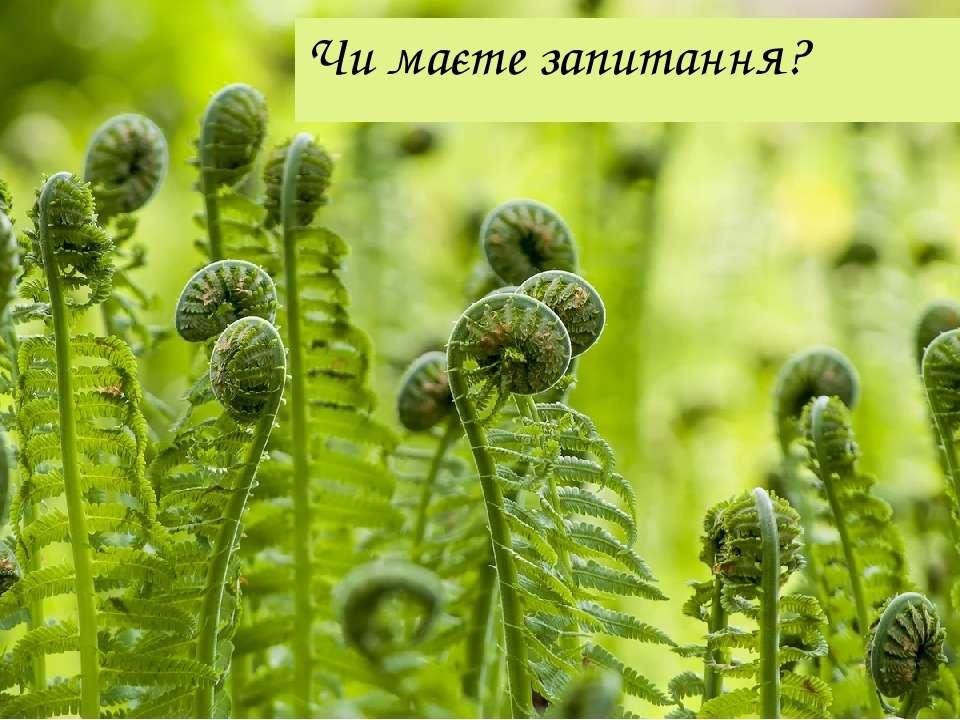 Чи маєте запитання?