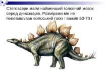 Стегозаври мали найменший головний мозок серед динозаврів. Розмірами він не п...