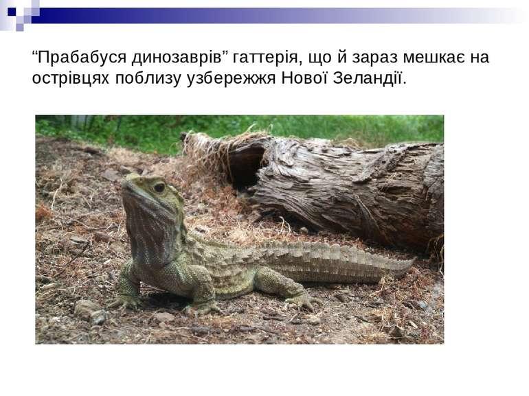 """""""Прабабуся динозаврів"""" гаттерія, що й зараз мешкає на острівцях поблизу узбер..."""