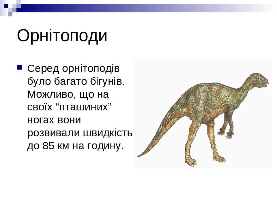"""Орнітоподи Серед орнітоподів було багато бігунів. Можливо, що на своїх """"пташи..."""