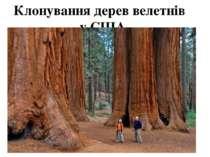 Клонування дерев велетнів у США