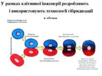У рамках клітинної інженерії розробляють і використовують технології гібридиз...