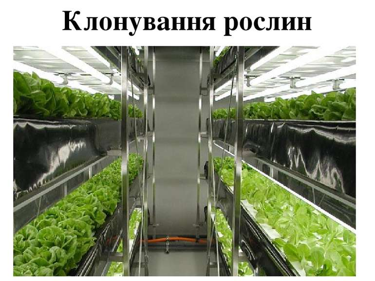 Клонування рослин
