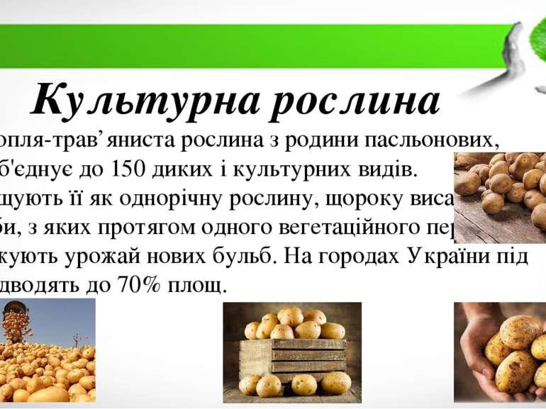 Культурна рослина Картопля-трав'яниста рослина з родини пасльонових, яка об'є...