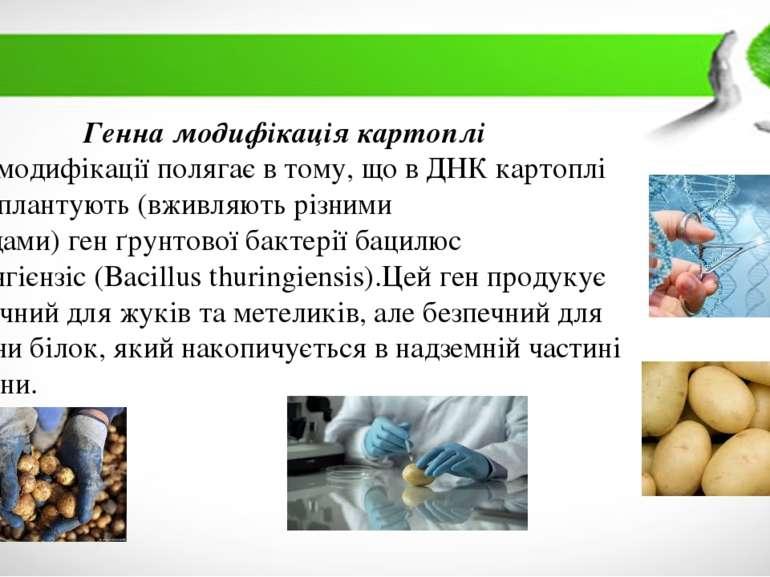 Генна модифікація картоплі Суть модифікації полягає в тому, що вДНКкартоплі...