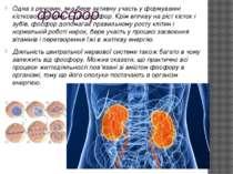 фосфор Одна з речовин, яка бере активну участь у формуванні кісткової системи...