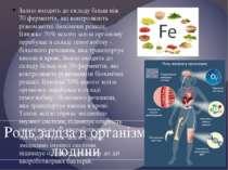 Залізо входить до складу більш ніж 70 ферментів, які контролюють різноманітні...