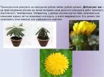 Також рослини реагують на періодичні добові зміни (добові ритми). Добові ритм...