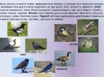 Також, велика кількість птахів переміщується (мігрує) у пошуках їжі з початко...