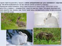 Іще одним пристосуванням у тварин є зміна забарвлення хутра в залежності від ...