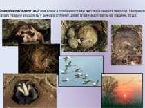 Поведінкові адаптації пов'язані з особливостями життєдіяльності тварини. Напр...