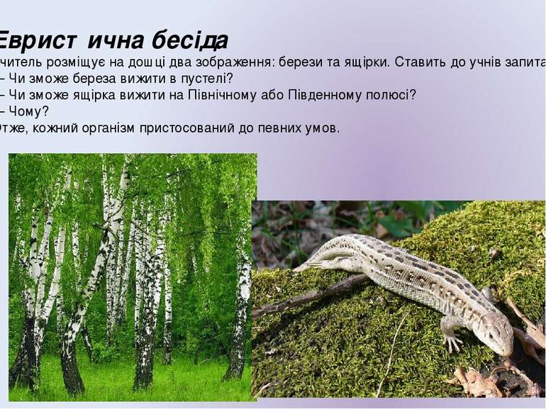 Евристична бесіда Учитель розміщує на дошці два зображення: берези та ящірки....