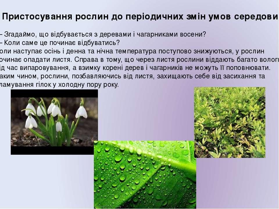 2. Пристосування рослин до періодичних змін умов середовища. — Згадаймо, що в...