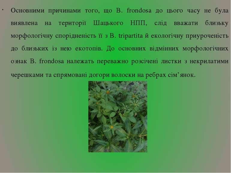 Основними причинами того, що B. frondosa до цього часу не була виявлена на те...
