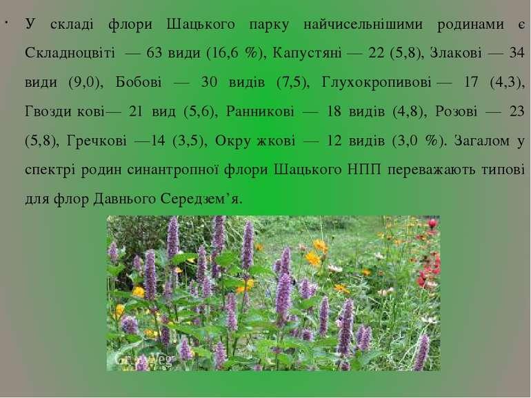 У складі флори Шацького парку найчисельнішими родинами є Складноцвіті — 63 в...