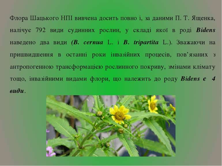 Флора Шацького HПІ вивчена досить повно і, за даними П. Т. Ященка, налічує 79...