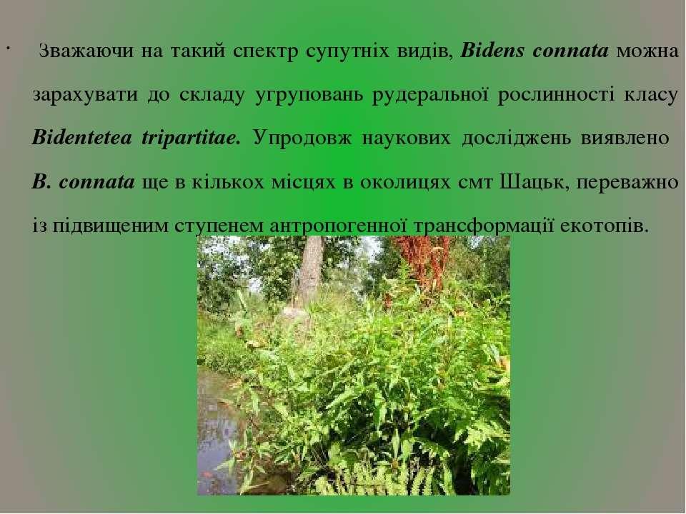 Зважаючи на такий спектр супутніх видів, Bidens connata можна зарахувати до с...